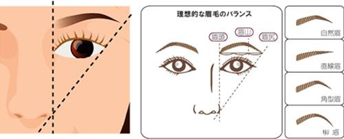 理想的な眉毛のバランス